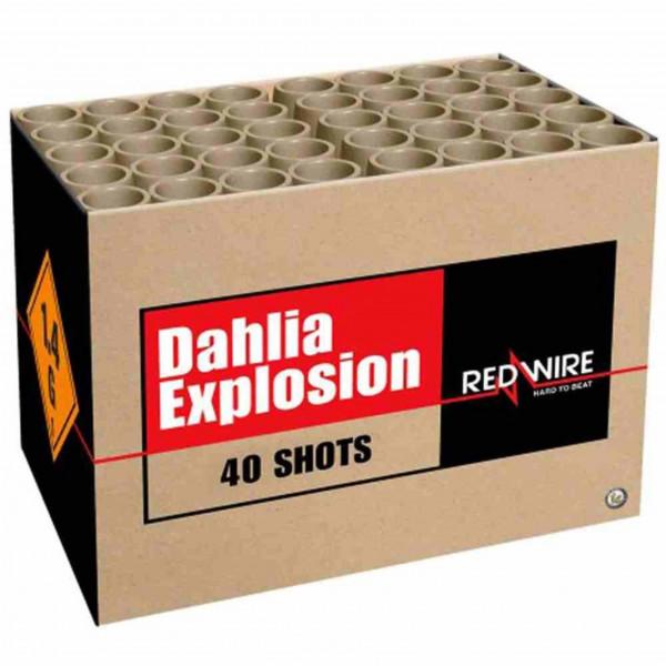 Feuerwerk Dahlia Explosion von Lesli online kaufen im Feuerwerkshop Funkelfun